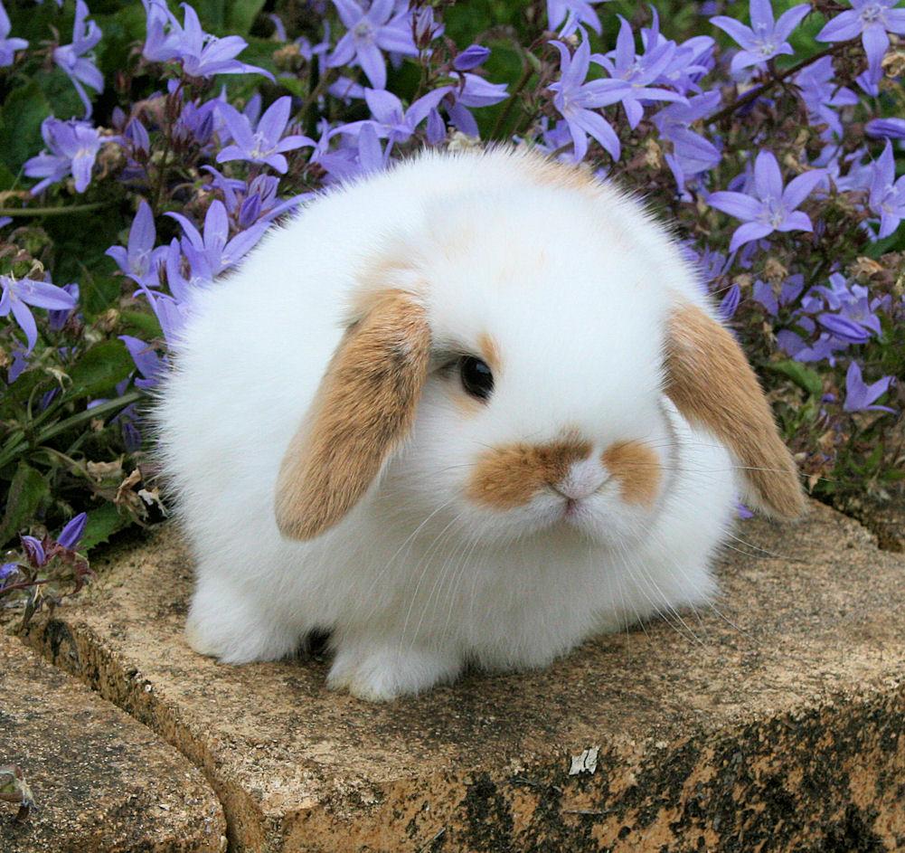Bunny orange 4