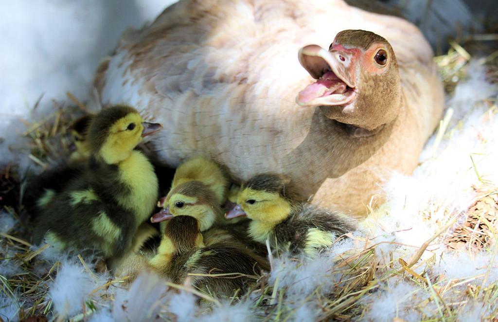 Danica and babies