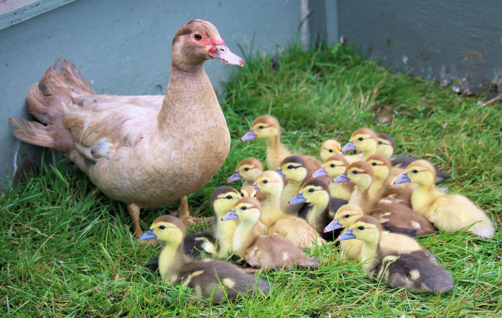 Danica and babies 3