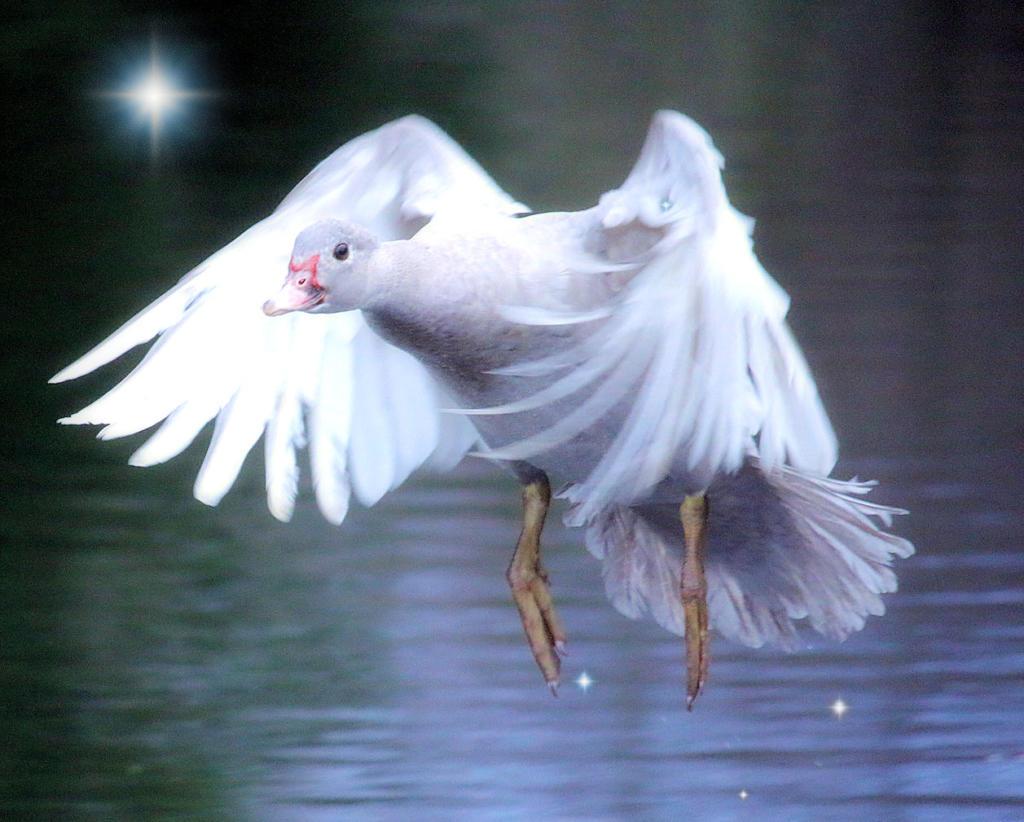 Gracelyn flies 2