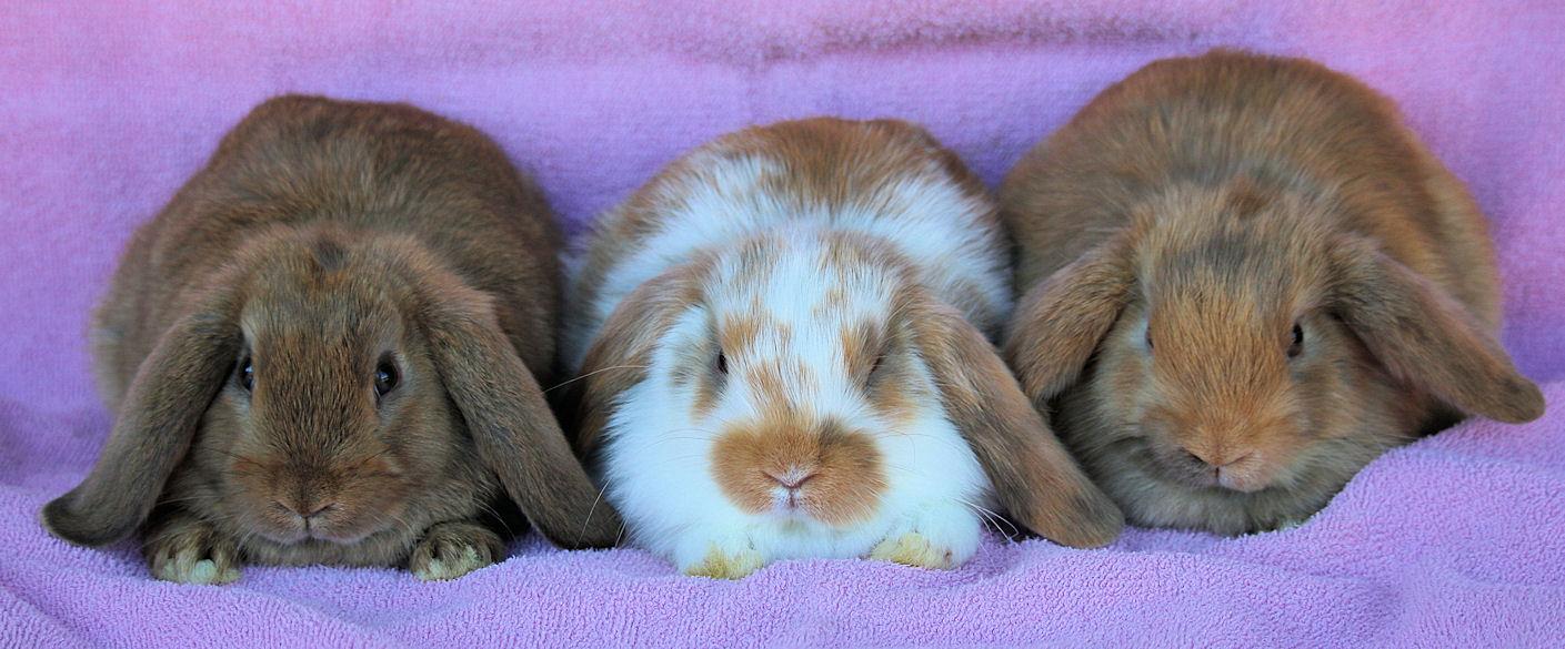 hl-doe-bunnies