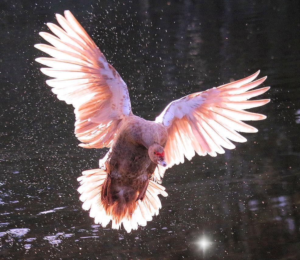 Louisa flies