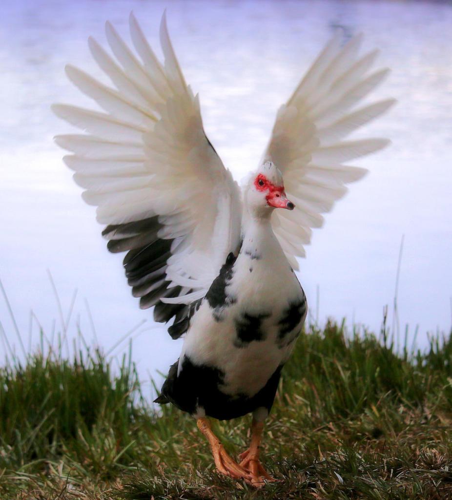 Sally wings