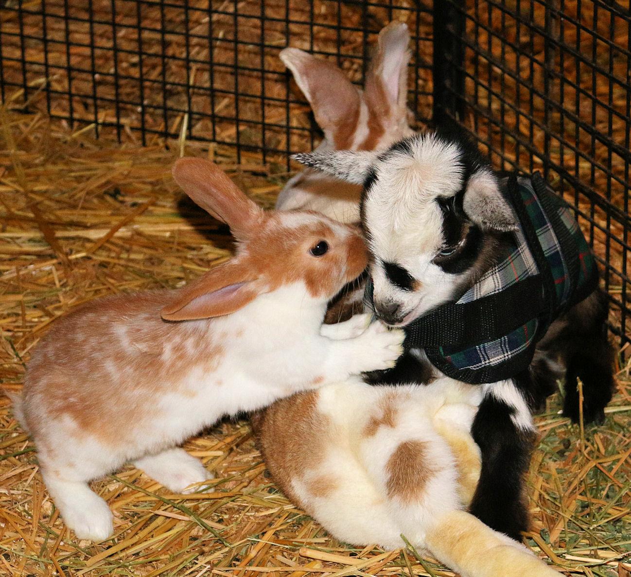Triumph gets bunny kisses