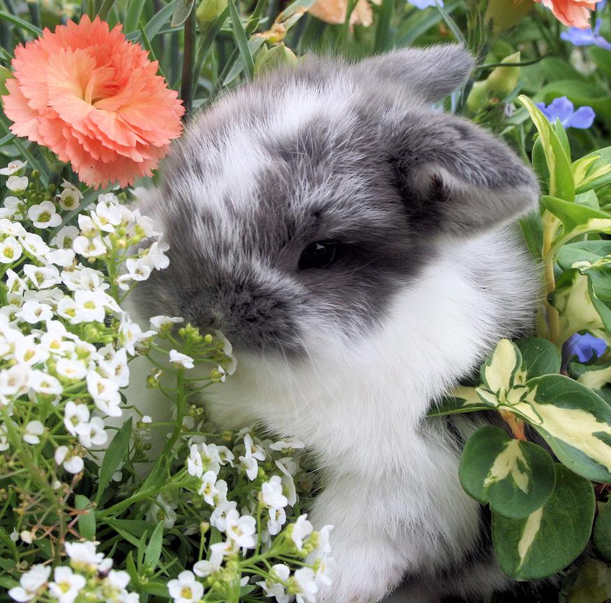 bunny - gray