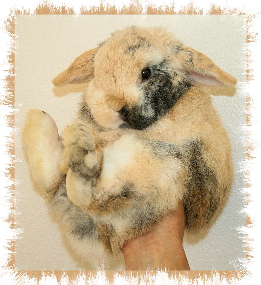 bunny hand mitt