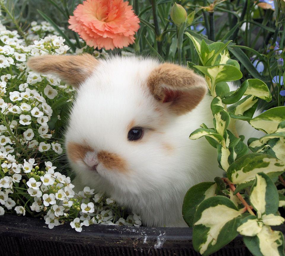 bunny tan