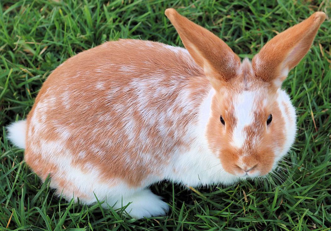 sale rabbit 2