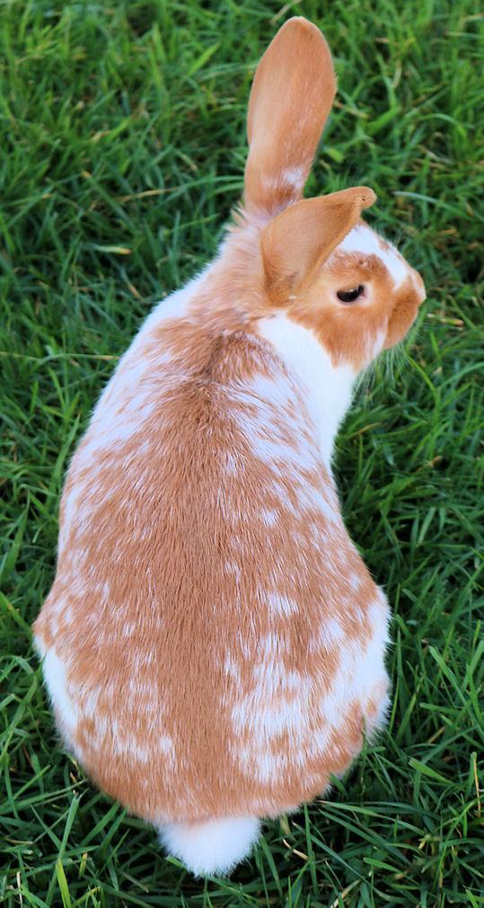 sale rabbit 3